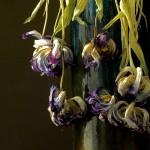 dried tulips