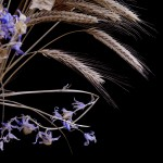 Lavender bluebells and crisp cream barley