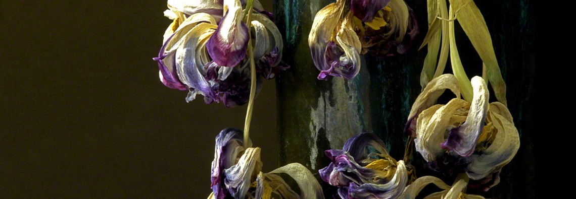 dried tulips